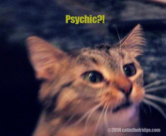 crepessaywhatpsychic