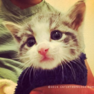 I'm a Tree House kitten!