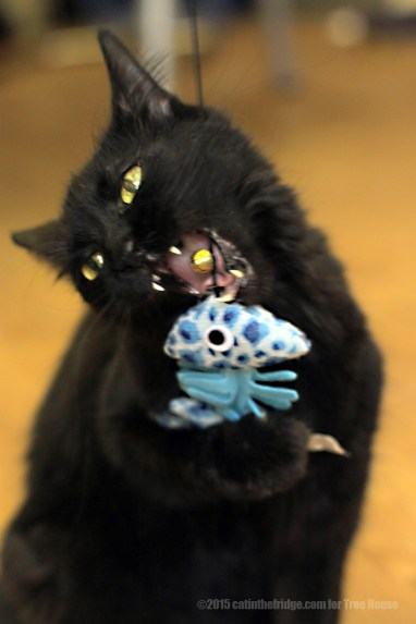 The catnip takes shows its effects.
