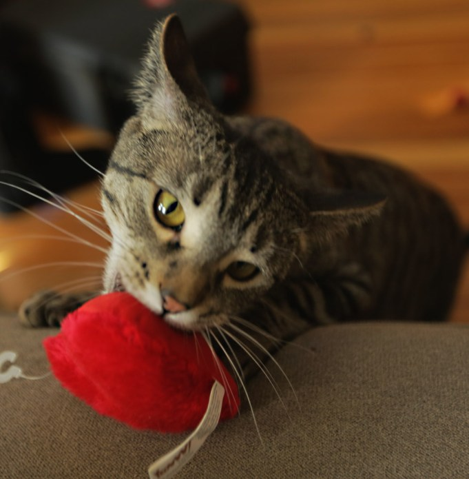 Mogly spies the Yeoww catnip heart.