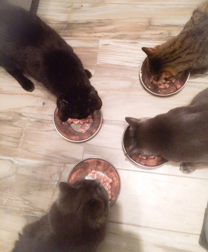 Four out of four testers enjoyed the Raw Bites.