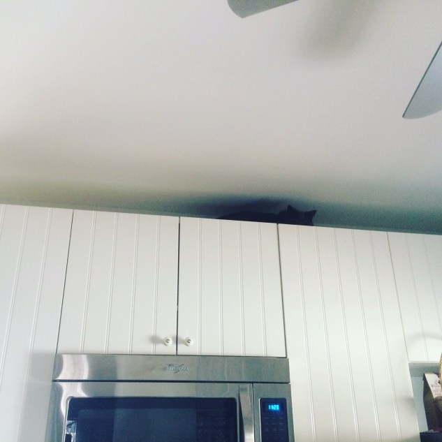 Louie is the first to discover the hiding spot on top of the kitchen cabinets.