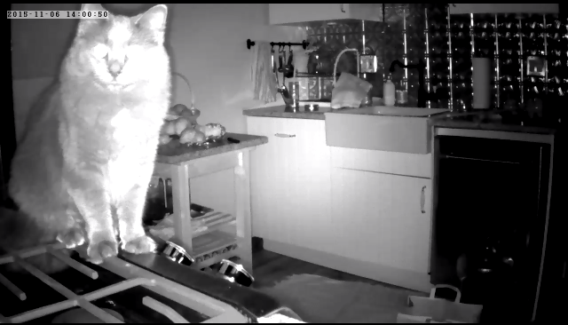 Louie caught up on the stove in the middle of the night. It's like he's challenging it.