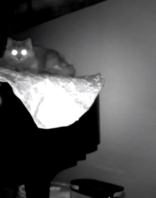 Louie in the middle of the night. Unsettling, at best.