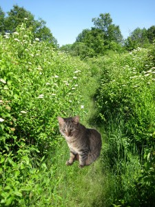 Crepes the Cat In the forest