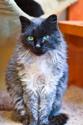 Henrietta: the coolest 12 year old around.