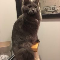FLUTD: Urinary Problems in Male Cats
