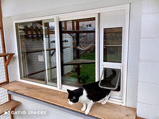 cat door for your catio by catio spaces