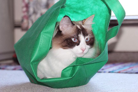 Cat in the bag