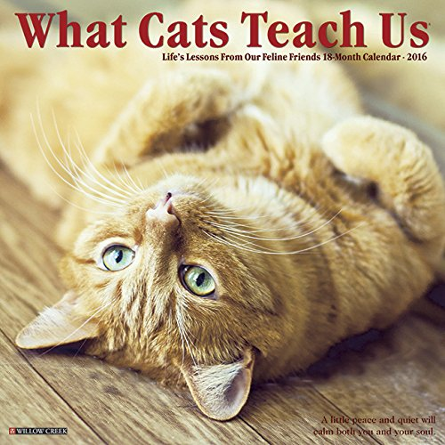 2016 What Cats Teach Us Wall Calendar