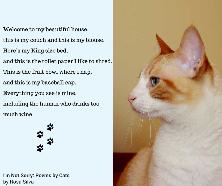 Im Not Sorry Poems By Cats Is Here Cat Lady