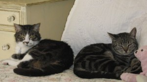 Punkie and Topper as Bookends 022