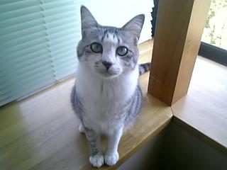 image/catlife-2005-10-20T13:19:31-1.jpg