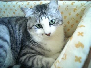 image/catlife-2005-10-21T16:10:37-1.jpg