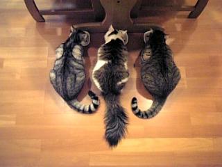 image/catlife-2005-10-25T21:23:38-1.jpg
