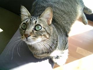 image/catlife-2005-10-30T10:12:37-1.jpg