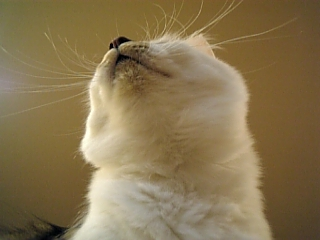 image/catlife-2005-11-03T20:13:44-1.jpg