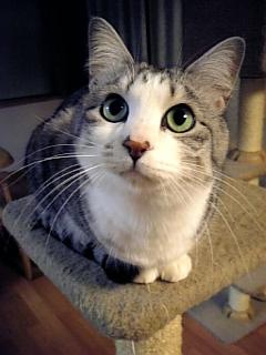 image/catlife-2006-03-09T20:26:21-1.jpg