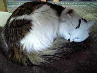 image/catlife-2006-03-31T15:46:06-1.jpg