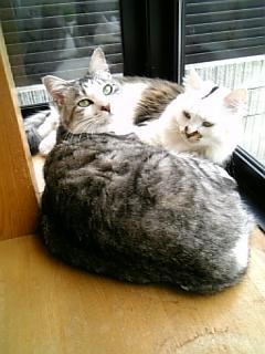 image/catlife-2006-04-04T13:31:29-1.jpg