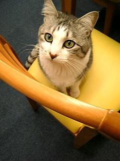 image/catlife-2006-04-05T09:53:45-1.jpg