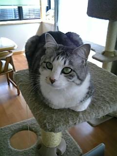 image/catlife-2006-04-12T10:27:47-1.jpg
