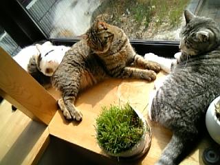 image/catlife-2006-04-18T09:08:28-1.jpg