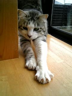 image/catlife-2006-04-21T10:02:53-1.jpg