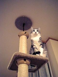 image/catlife-2006-04-21T20:18:06-1.jpg