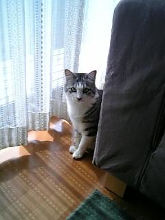 image/catlife-2006-04-22T09:12:05-1.jpg