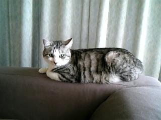 image/catlife-2006-04-23T12:04:08-1.jpg