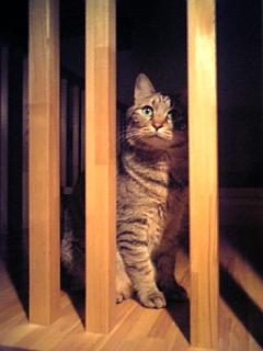 image/catlife-2006-04-24T18:54:04-1.jpg