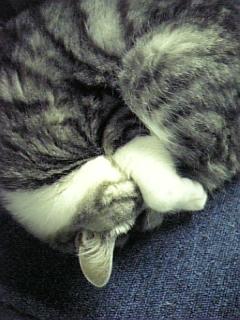 image/catlife-2006-04-26T01:42:55-1.jpg