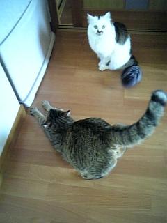 image/catlife-2006-04-28T12:55:23-1.jpg
