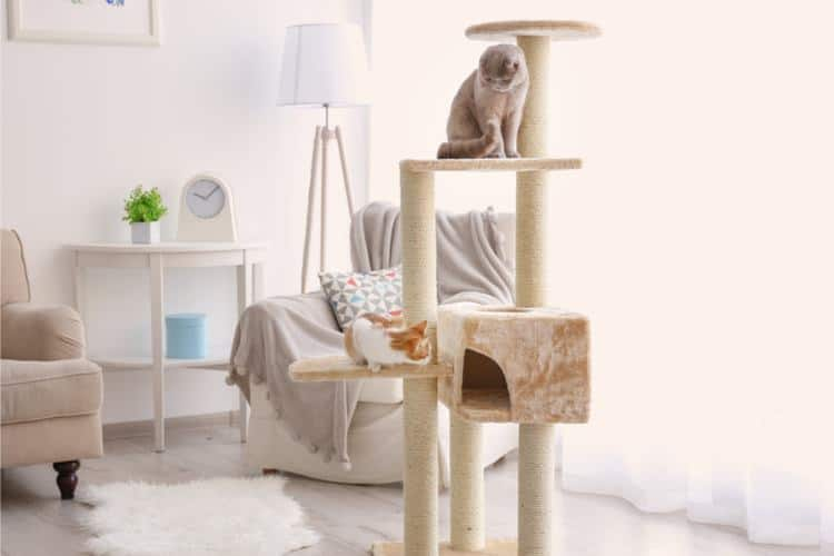 The 26 Best Cat Trees Of 2020 Cat Life Today