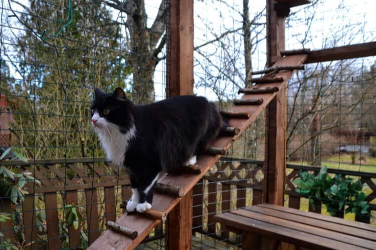 the 25 best outdoor cat enclosures of