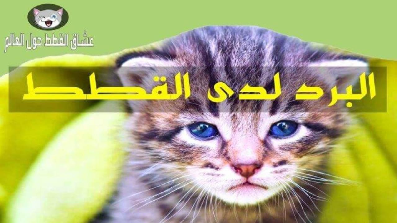 علاج القطط من البرد و الزكام سواءا القطط الصغيرة أو الكبيرة عشاق القطط حول العالم
