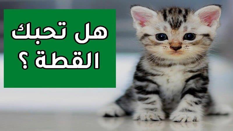 تربية القطط المنزلية كيفية تربية القطط والعناية بها عشاق
