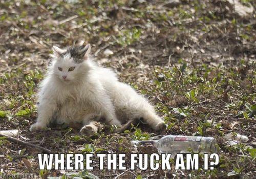 wtf where am i fucked up cat lol cat macro