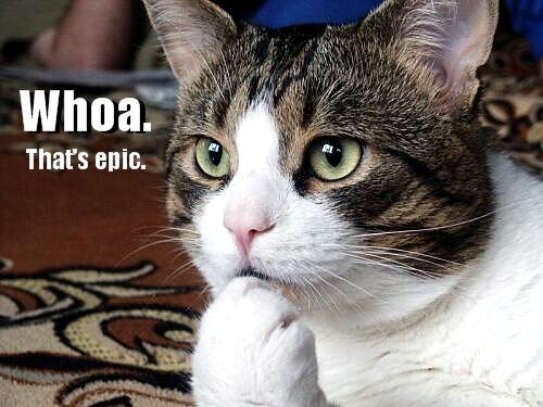 whoa thats epic lol cat macro