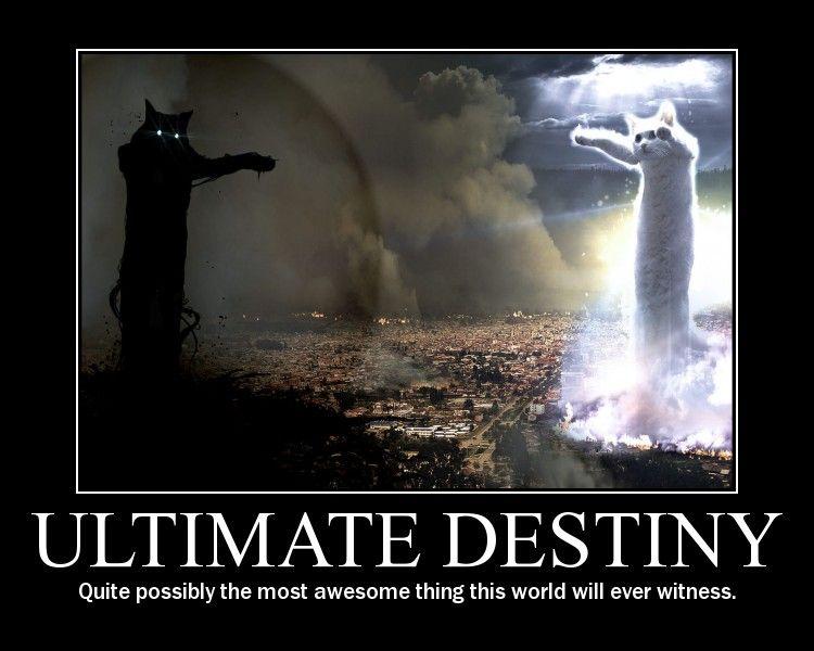 longcat ultimate destiny awesome lol cat macro