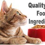 Quality Cat Food Ingredients | Cat Mania