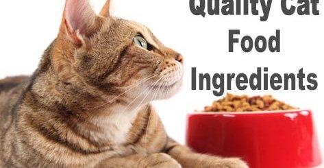 Quality Cat Food Ingredients   Cat Mania