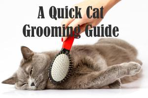 Grooming a Cat : A Quick Guide