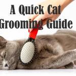 Cat Grooming | Cat Mania
