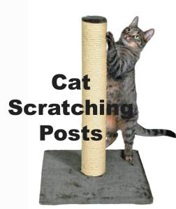 Cat Scratching Posts : Do Cat's Need Them?