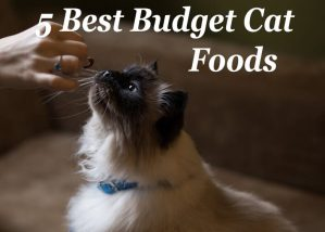 The 5 Best Budget Cat Foods : Low Cost but Quality