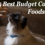 5 Best Budget Cat Foods : Low Cost but Quality   Cat Mania