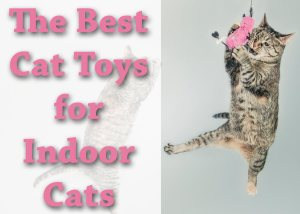 Best Cat Toys for Indoor Cats