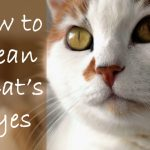 How to Clean a Cats Eyes